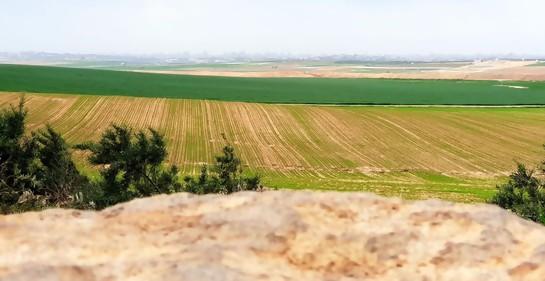 Las tierras quemadas en el sur de Israel se han recuperado