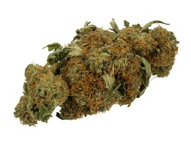 Conferencia sobre cannabis medicinal en Tel Aviv: Cannatech 2019