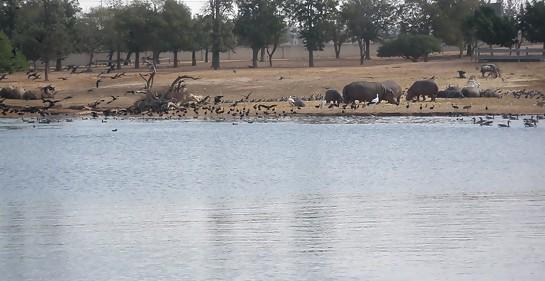zoologico de Ramat GAn