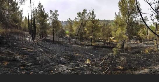 Así quedó el bosque Ben Shemen (Foto KKL)
