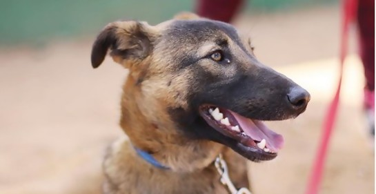El papel del perro en la rehabilitación de reclusos
