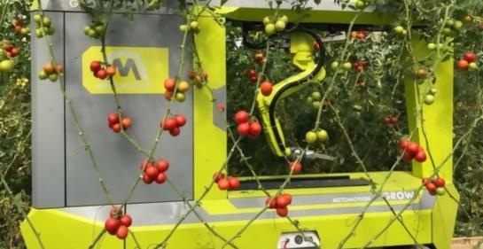 Israel presenta el primer robot de recolección de tomates del mundo