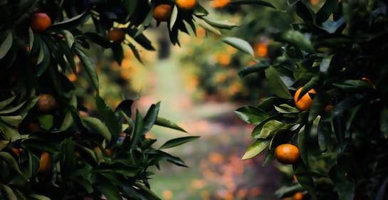 La innovación israelí ya conquista la industria de la fruta