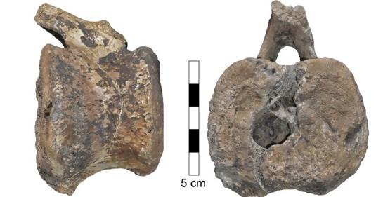 Enfermedad  encontrada en fósil de dinosaurio afecta a humanos aún hoy