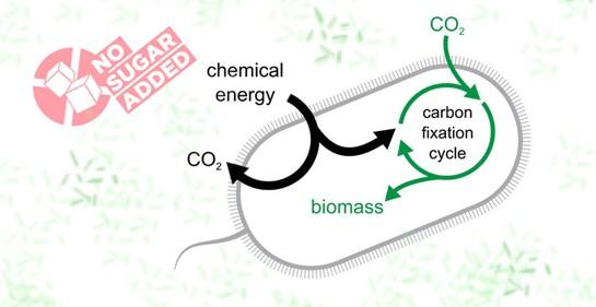 La dieta más sostenible: Bacterias que cambian al consumir dióxido de carbono