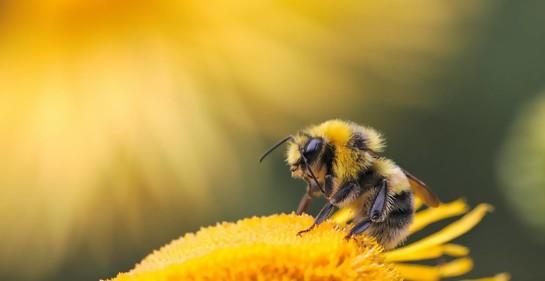 Una empresa israelí salva a las abejas de la muerte
